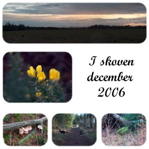 skoven-collage.jpg