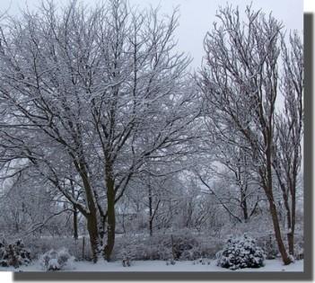 hvid-som-sne.jpg