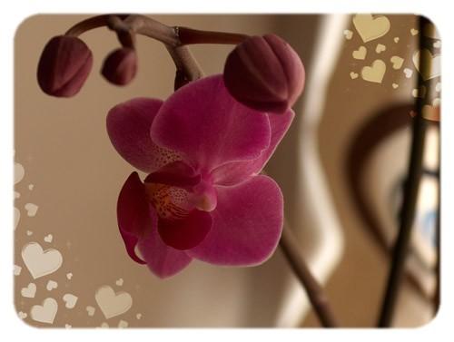 orkide1.jpg