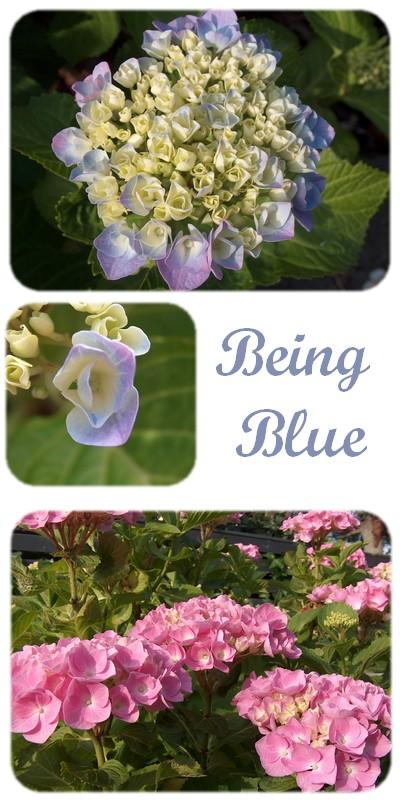 being-blue.jpg