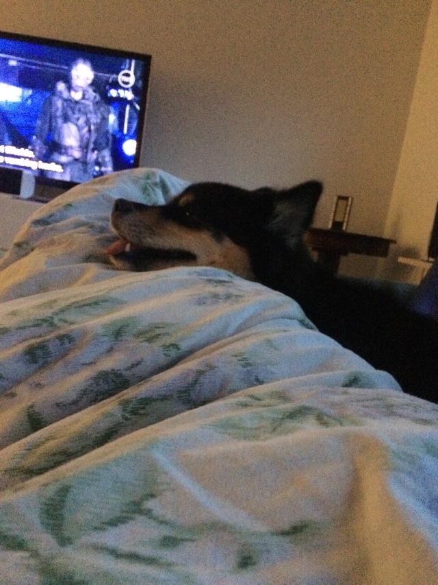 Mellemjul med snot og fyrværkeriforskrækket hund